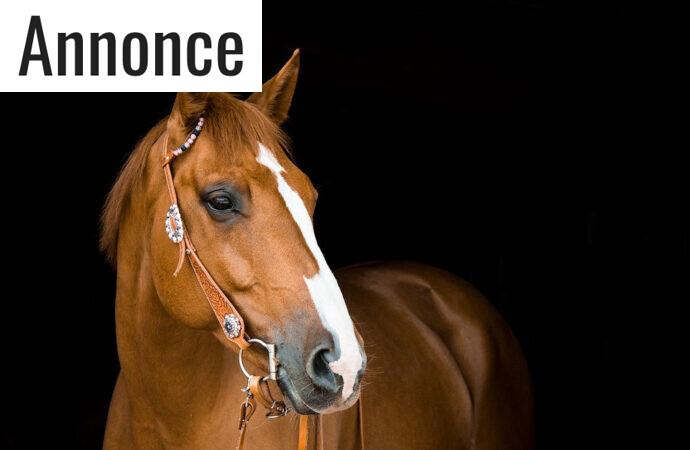 Det er dyrt at have en hest